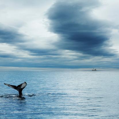 istock Whale 180694793