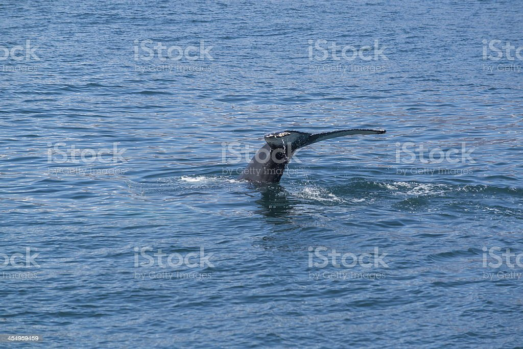 Whale stock photo