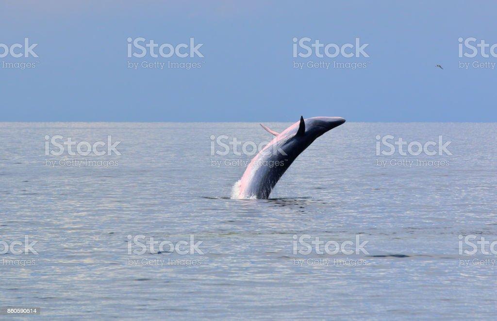 De ballena - foto de stock