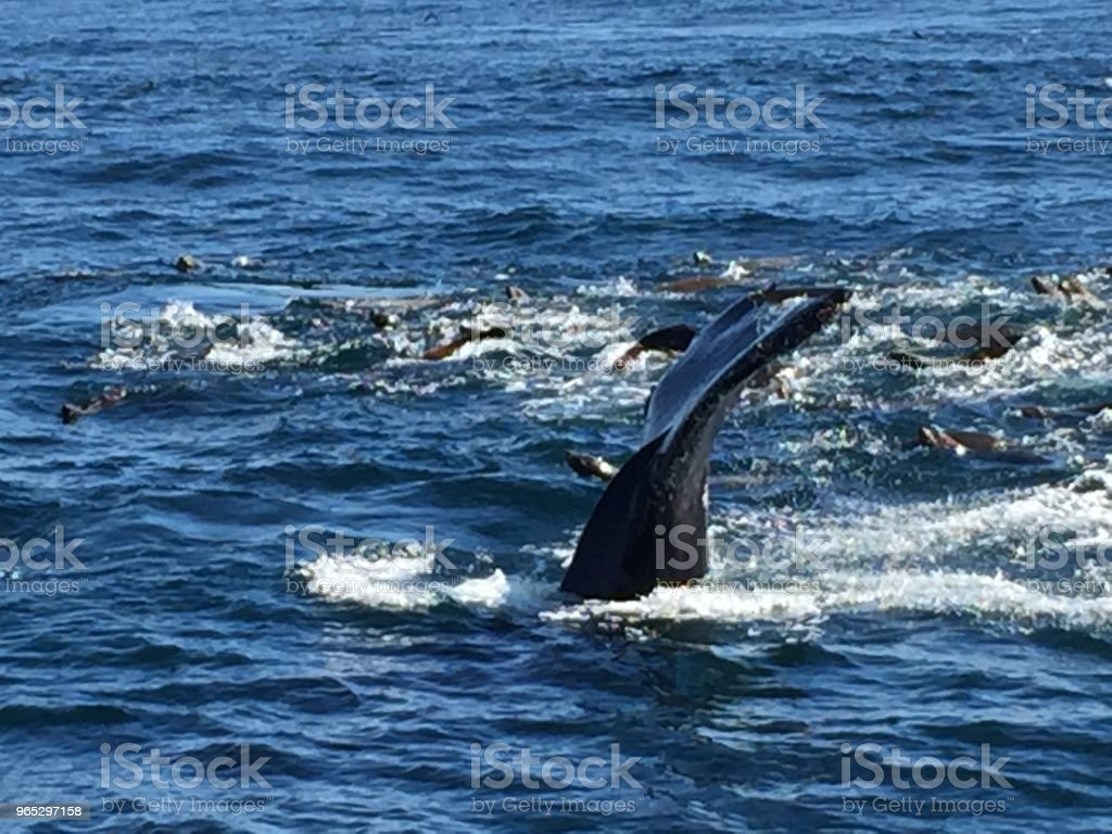 Whale royalty-free stock photo