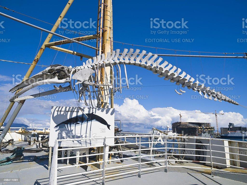 Whale skeleton royalty-free stock photo