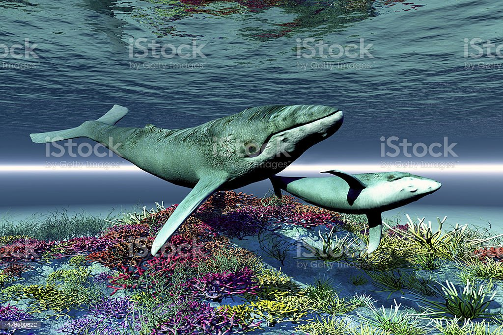 Whale Song stock photo