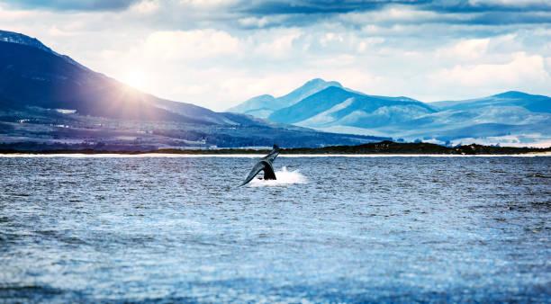 Whale Tail im Atlantischen Ozean – Foto