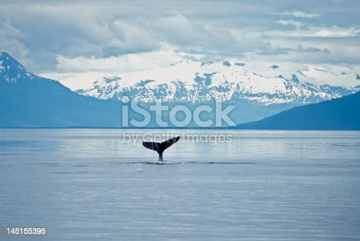 Humpback whale sounding. Frederick Sound SW Alaska. Mountain background