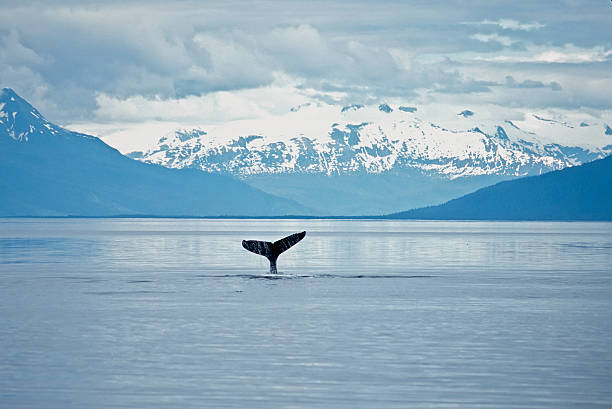 whale tail - tail stock photos and pictures