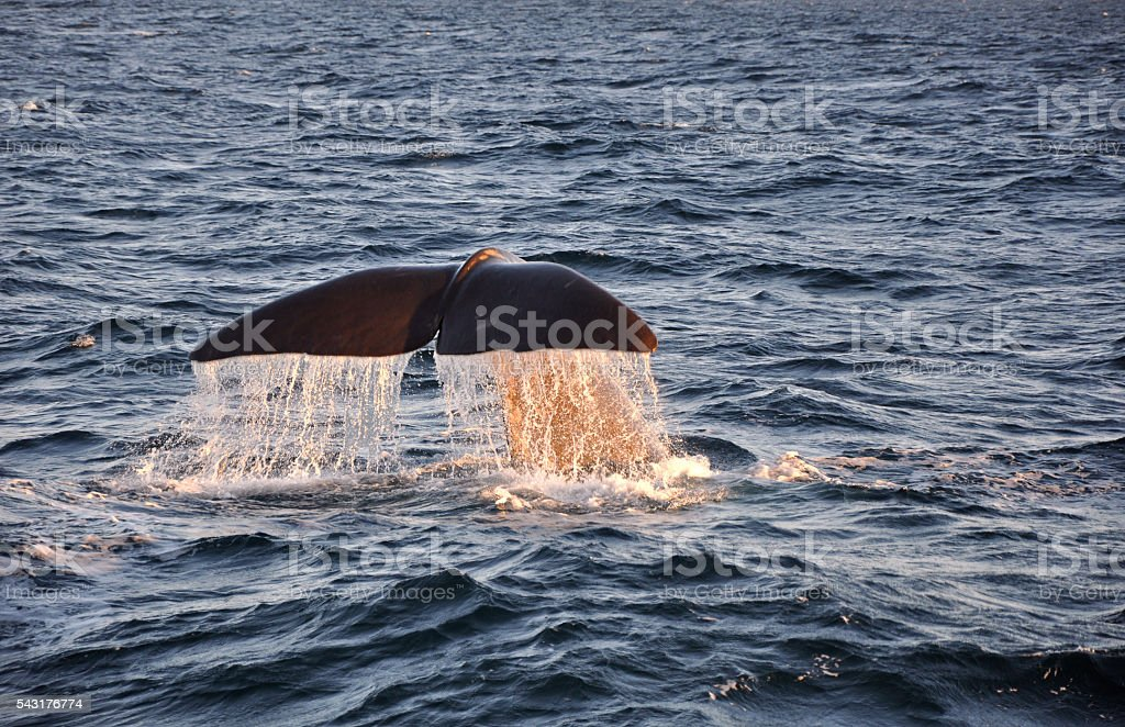 whale tail with water drops stock photo