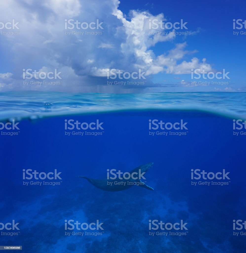 Whale underwater sea split with cloudy blue sky стоковое фото