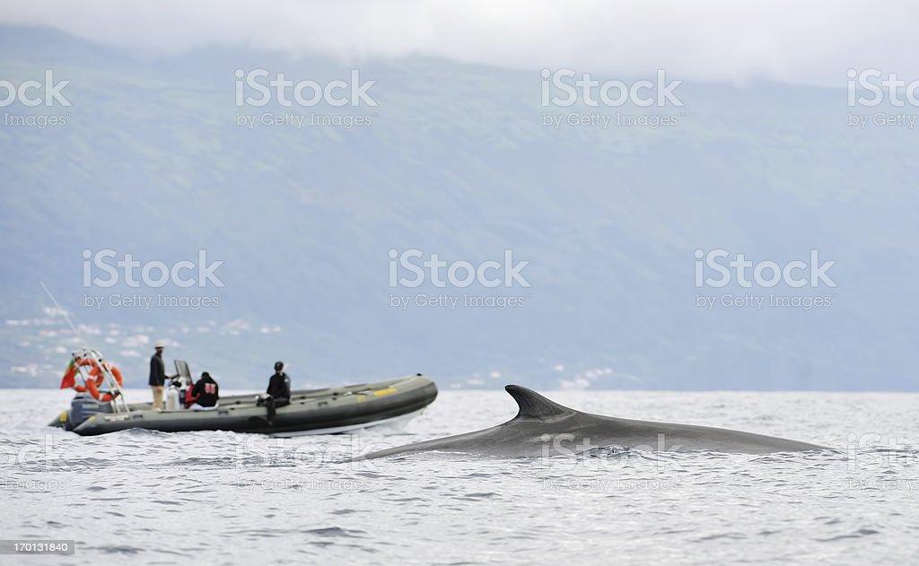 Наблюдать за китами в Азорские острова стоковое фото