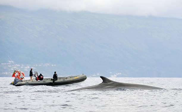 Walbeobachtung in den Azoren – Foto