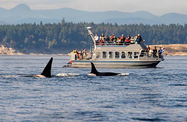 Observation des baleines en bateau, en Colombie-Britannique, au Canada. - Photo