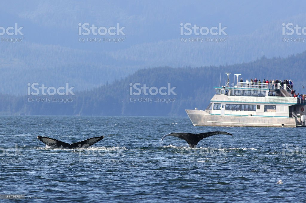 Whale Watching in Alaska stock photo