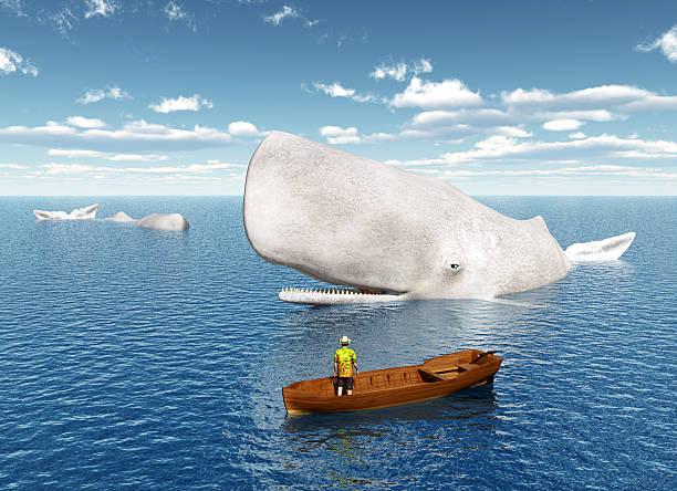 Observation des baleines - Photo