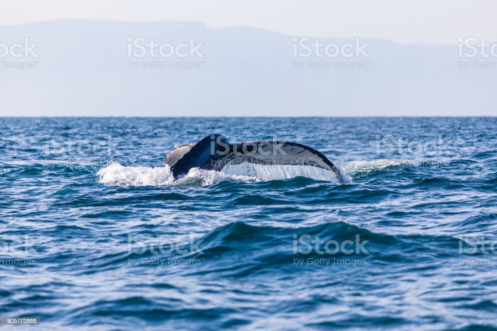 whale watching stock photo