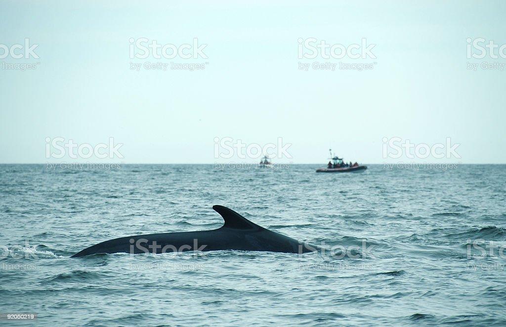 Observación de ballenas - foto de stock