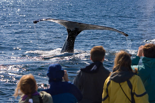 Whale watching  dorsal fin stock pictures, royalty-free photos & images