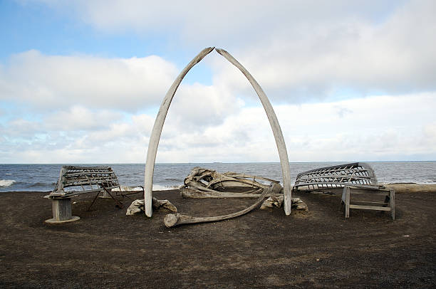 Whalebones & bateaux - Photo