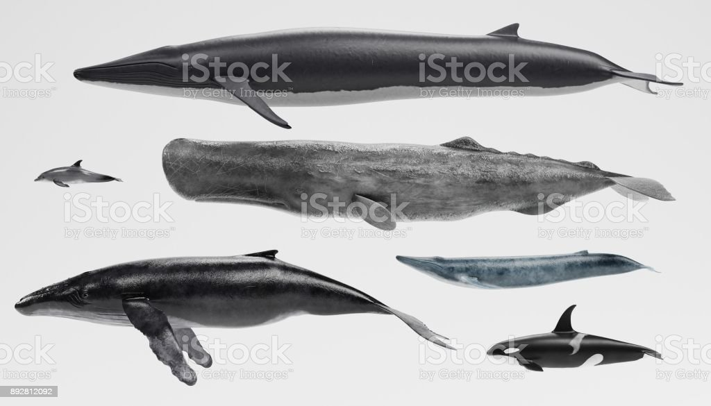 Whales Collection stock photo