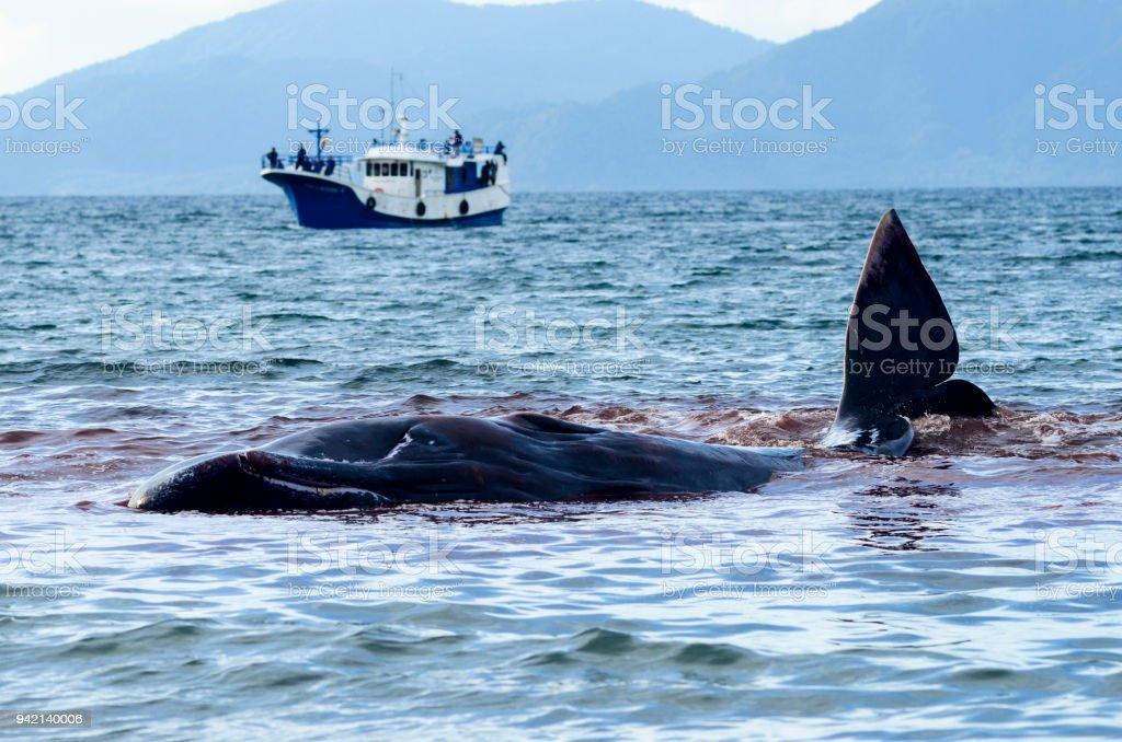 Whales Stranded - Foto stock royalty-free di Ambientazione esterna