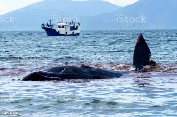 Balene Spiaggiate - Fotografie stock e altre immagini di Balena