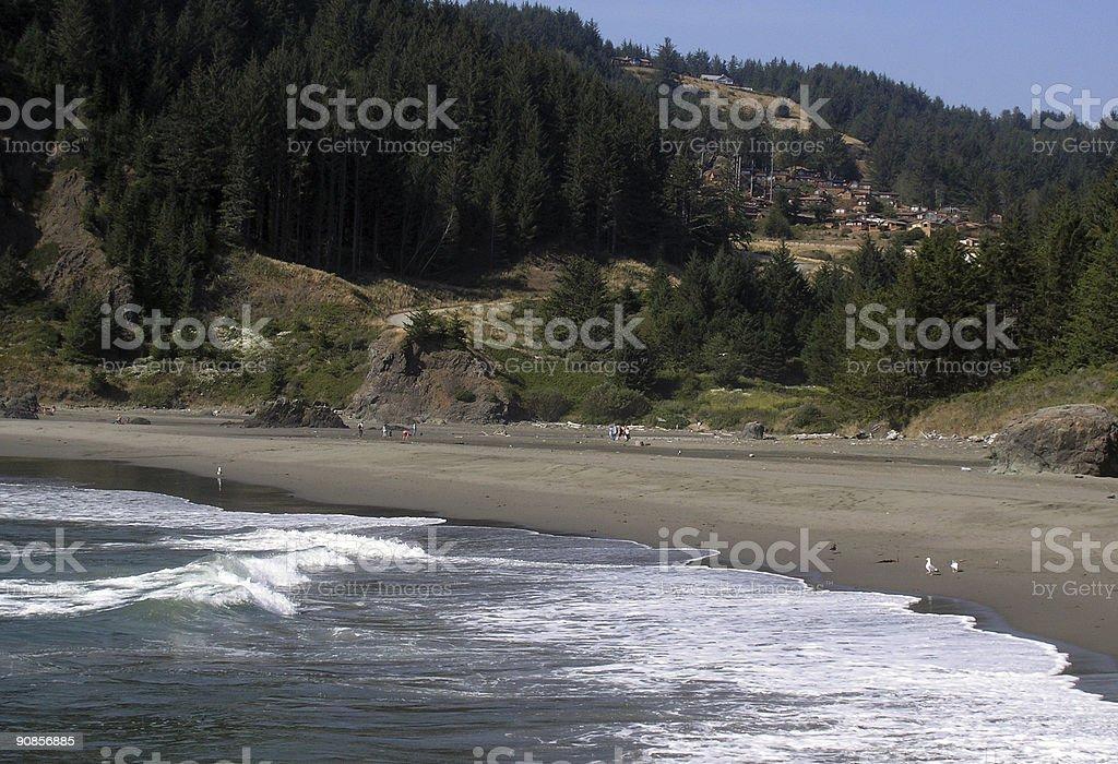 WhalesHead stock photo