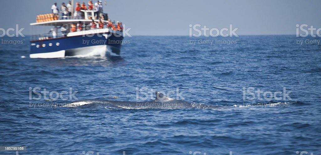 Whale-watching boat with Blue Whale, Mirissa, Sri Lanka stock photo