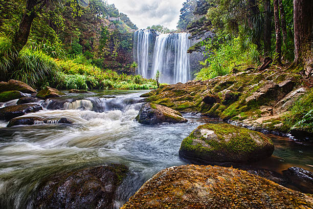 whangarei waterfalls, new zealand - waterfall stock photos and pictures