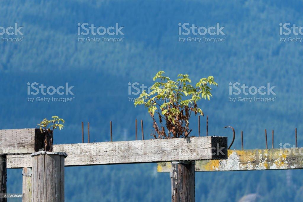 Wharf stock photo