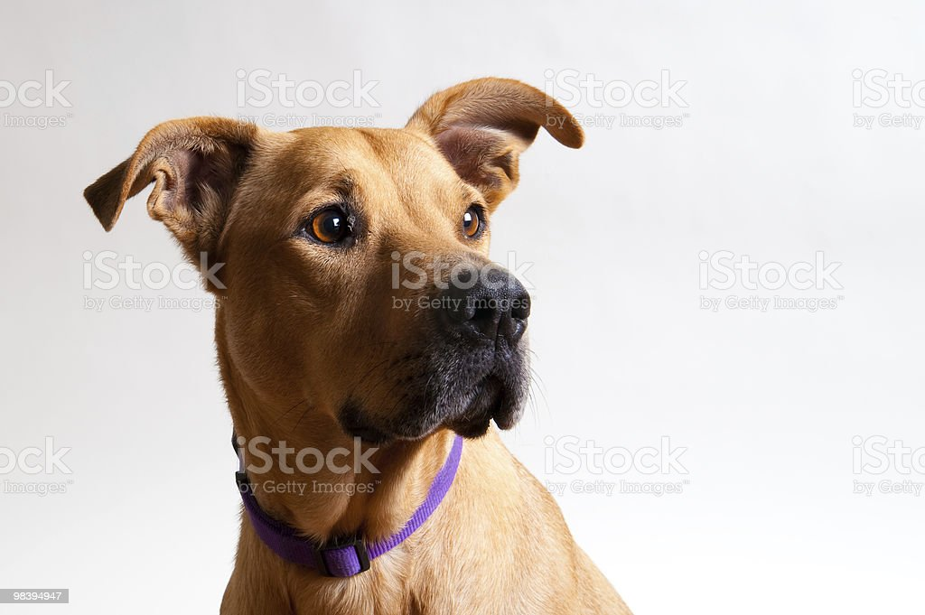 What a cutie royalty-free stock photo
