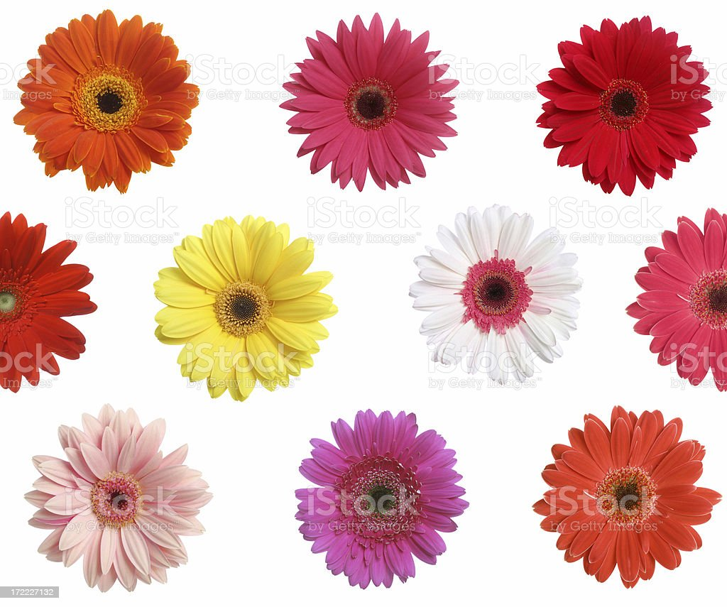 What A Daisy! (background) stock photo