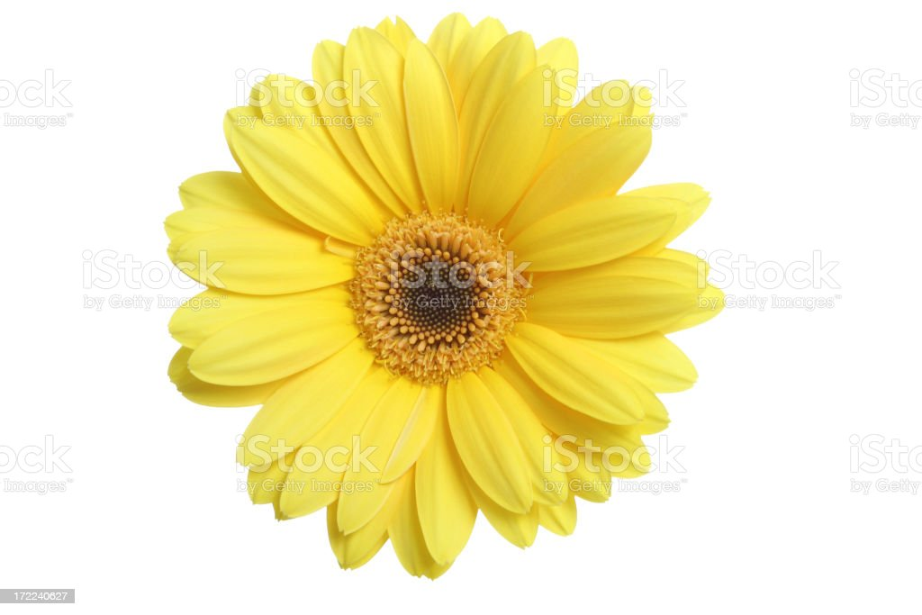 What A Daisy! stock photo