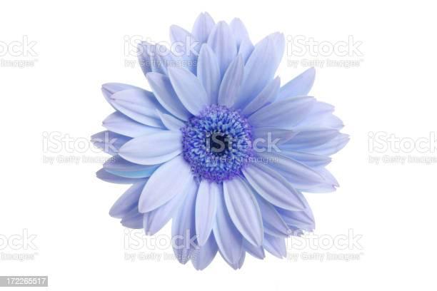 What a daisy picture id172265517?b=1&k=6&m=172265517&s=612x612&h=jnypsspbmxteao4kohmgzu9hdbyxuj4raxxuqmazlus=