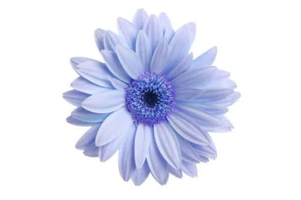 What a daisy picture id172265517?b=1&k=6&m=172265517&s=612x612&w=0&h=hlt0kmmbq2eaj wcpowwqojraas4z gxuk g040tlgi=