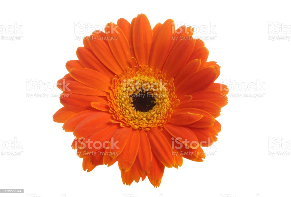What A Daisy! royalty-free stock photo