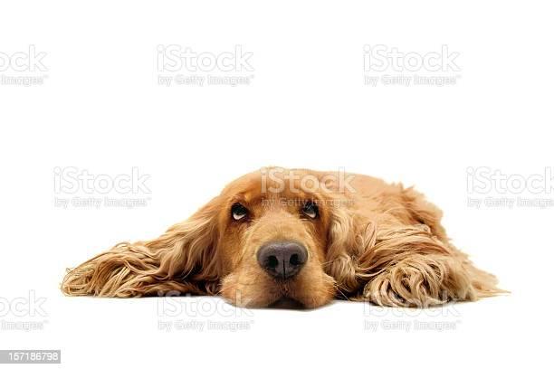 What a dog day picture id157186798?b=1&k=6&m=157186798&s=612x612&h=kv4c 3abf9yiljrihsoxekobb67br1vzx71qwanefko=