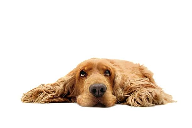 what a dog day ! - yatmak stok fotoğraflar ve resimler