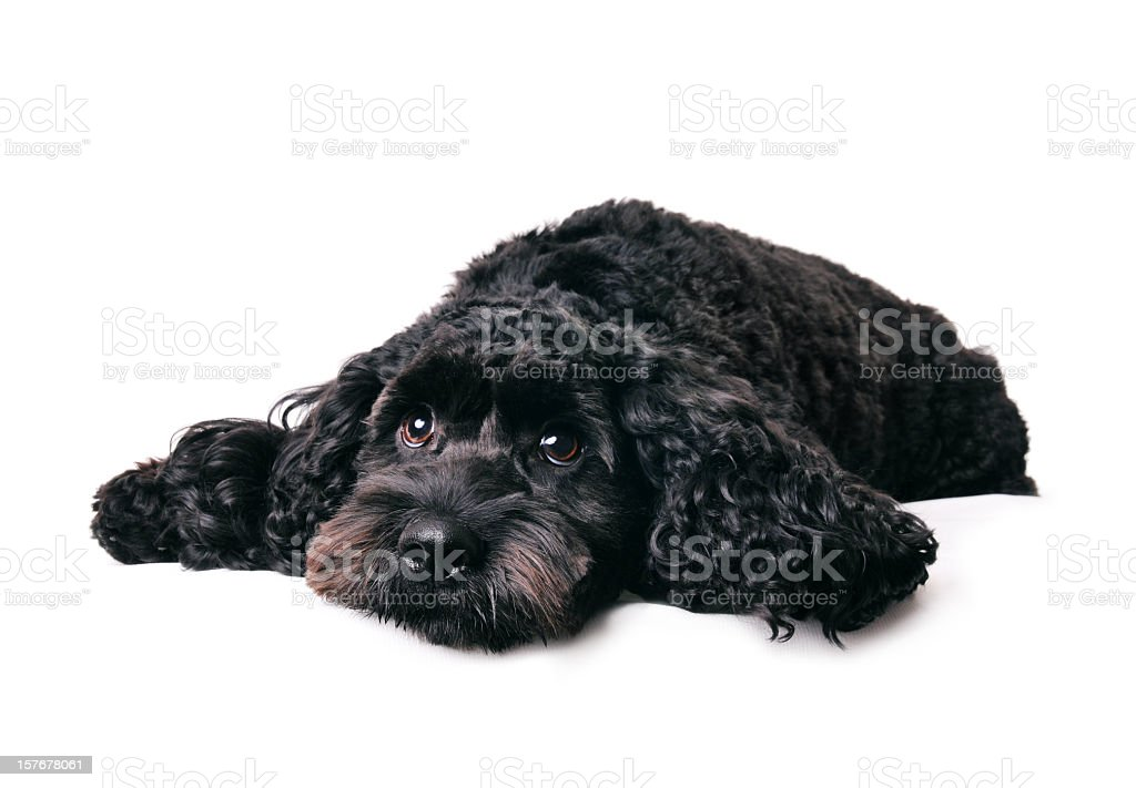 What a dog day... stock photo