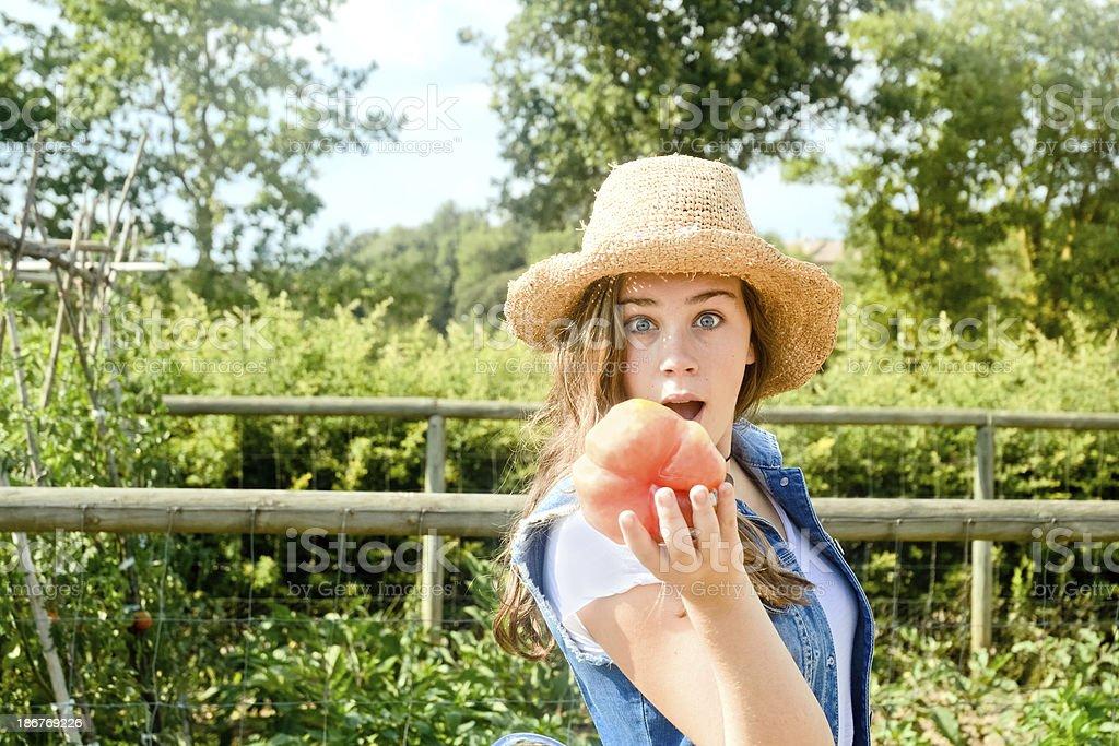 What a tomato royalty-free stock photo