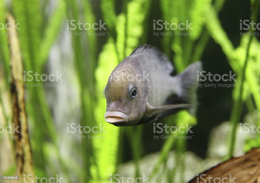 What are you looking for stock photo