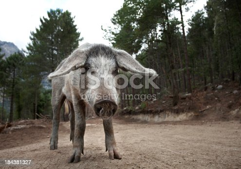 istock What Do You Want From Me? 184381327