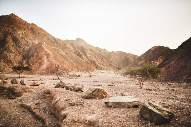 What happened to all the water? Shot of a dry area of deserted land wilderness stock pictures, royalty-free photos & images