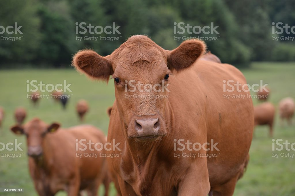 What you looking at? stock photo