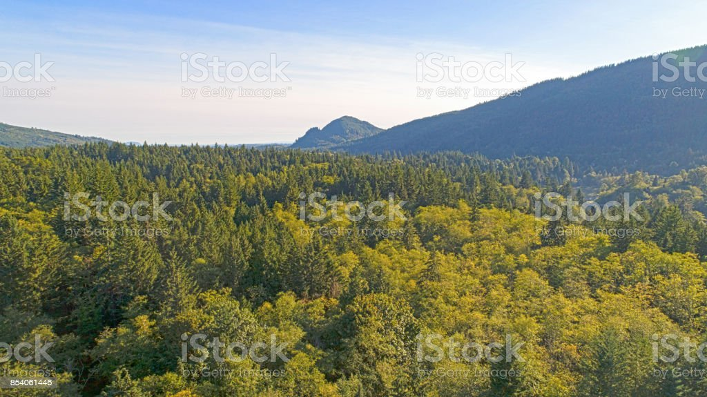Whatcom County Green Forest Alger Washington stock photo