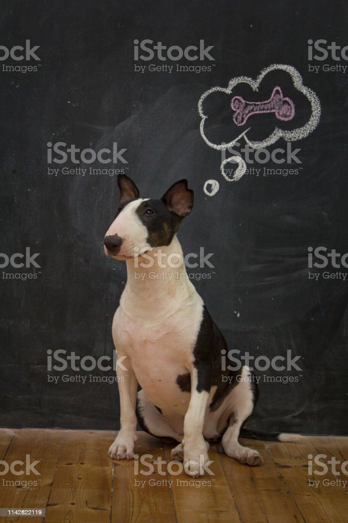 whats dog download