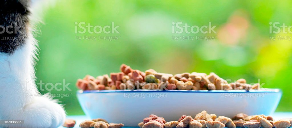 What's for lunch? plate catfood in grass stock photo