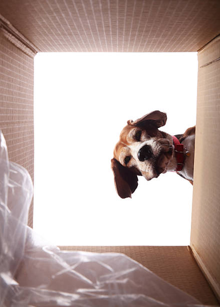 What's in here? stock photo