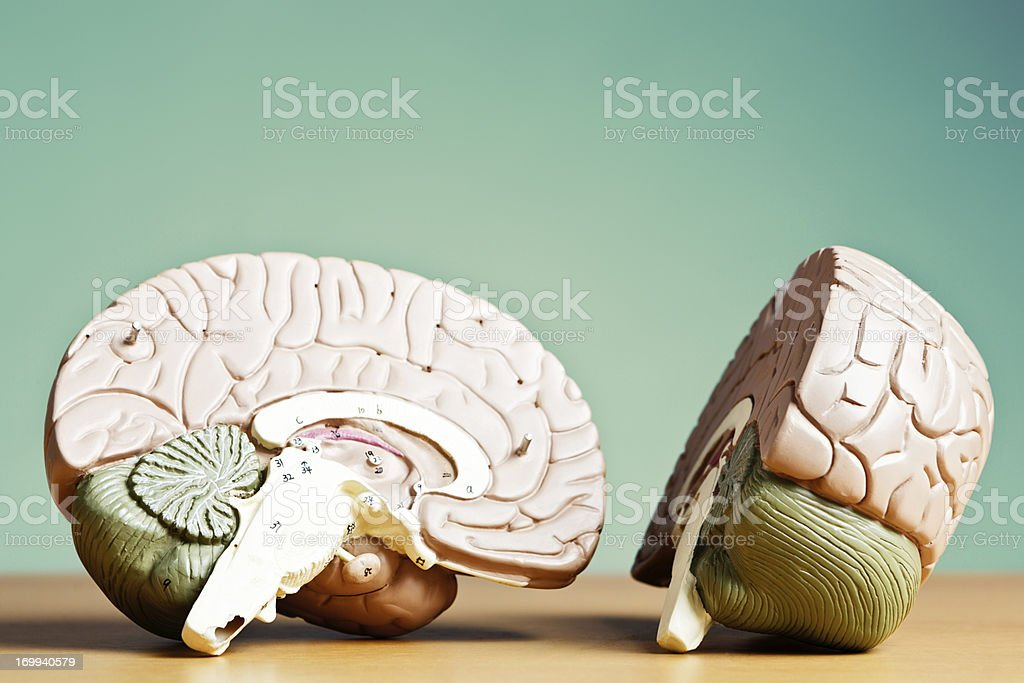 What's on your mind? Model brain split in two stock photo