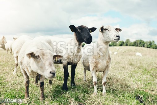 945075416 istock photo What's that over there? 1132035128