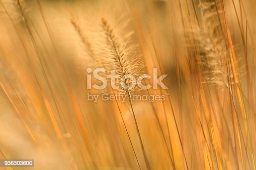 istock Wheat Abstract Background 936303600