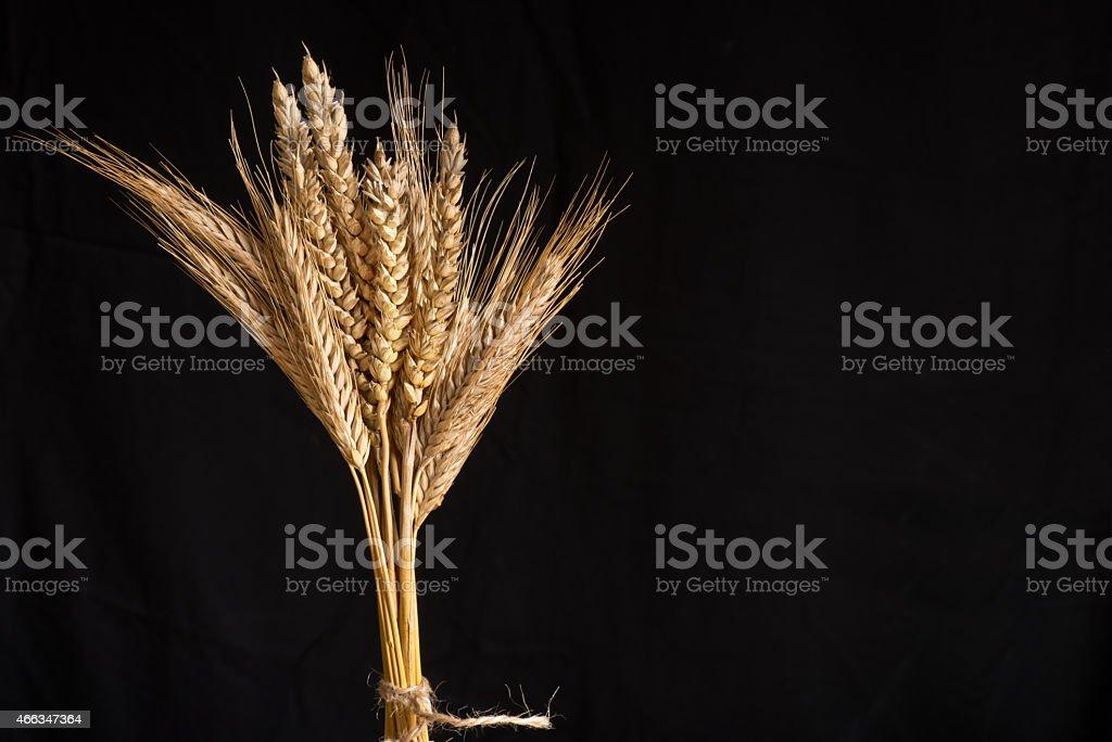 wheat and barley stock photo