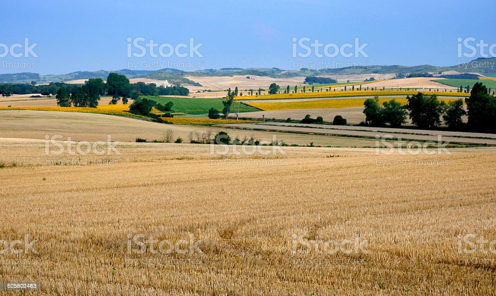 Wheat and sunflower fields, Mirepoix, France stock photo